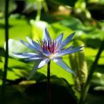 flower-1286081_1280